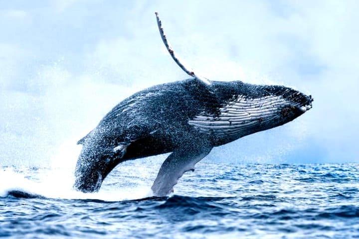 Avistamiento de Ballenas en Reikiavik Islandia Foto Avistamiento de ballenas al mejor precio desde Reikiavik