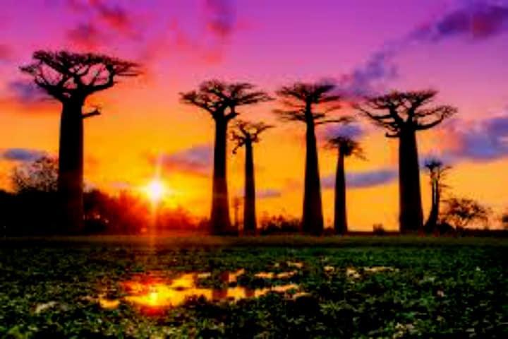 Madagascar, la isla de las extravagancias_Foto_Dennisvdw