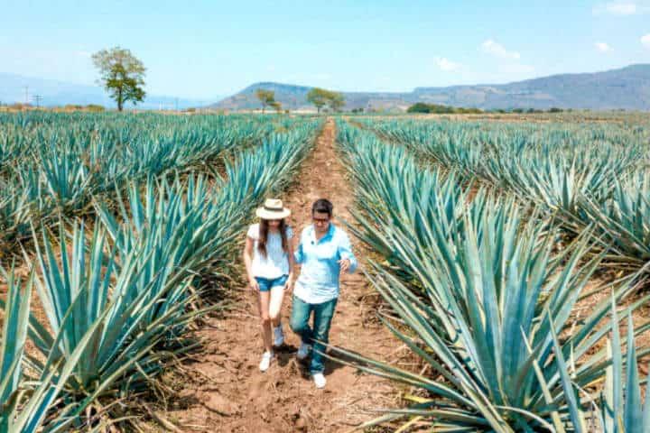 Ruta del Tequila Foto Sin Postal