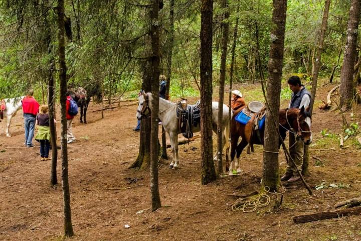 Viaje-a-caballo-para-llegar-al-santuario.-Excursión-Mariposa-Monarca-con-el-Souvenir.-Foto:-Tips-para-tu-viaje-4