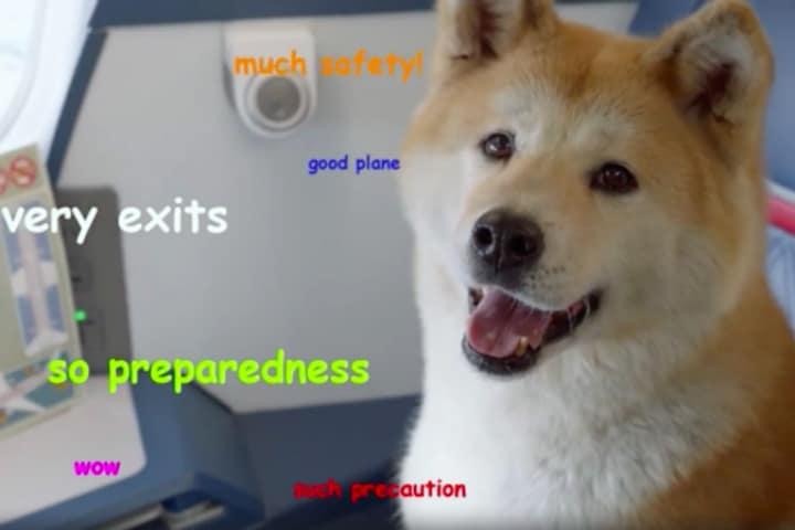 ¿Cuántos memes encontraste en el video de seguridad de Deta Airlines