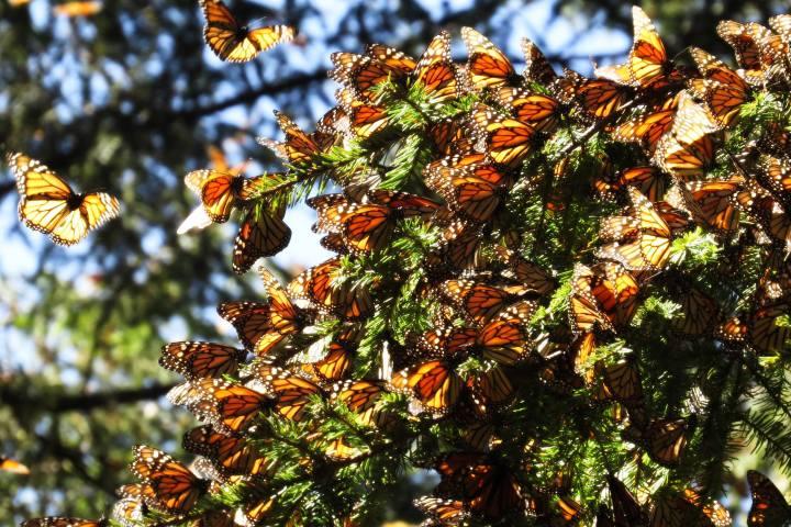 Tour Mariposas Monarca