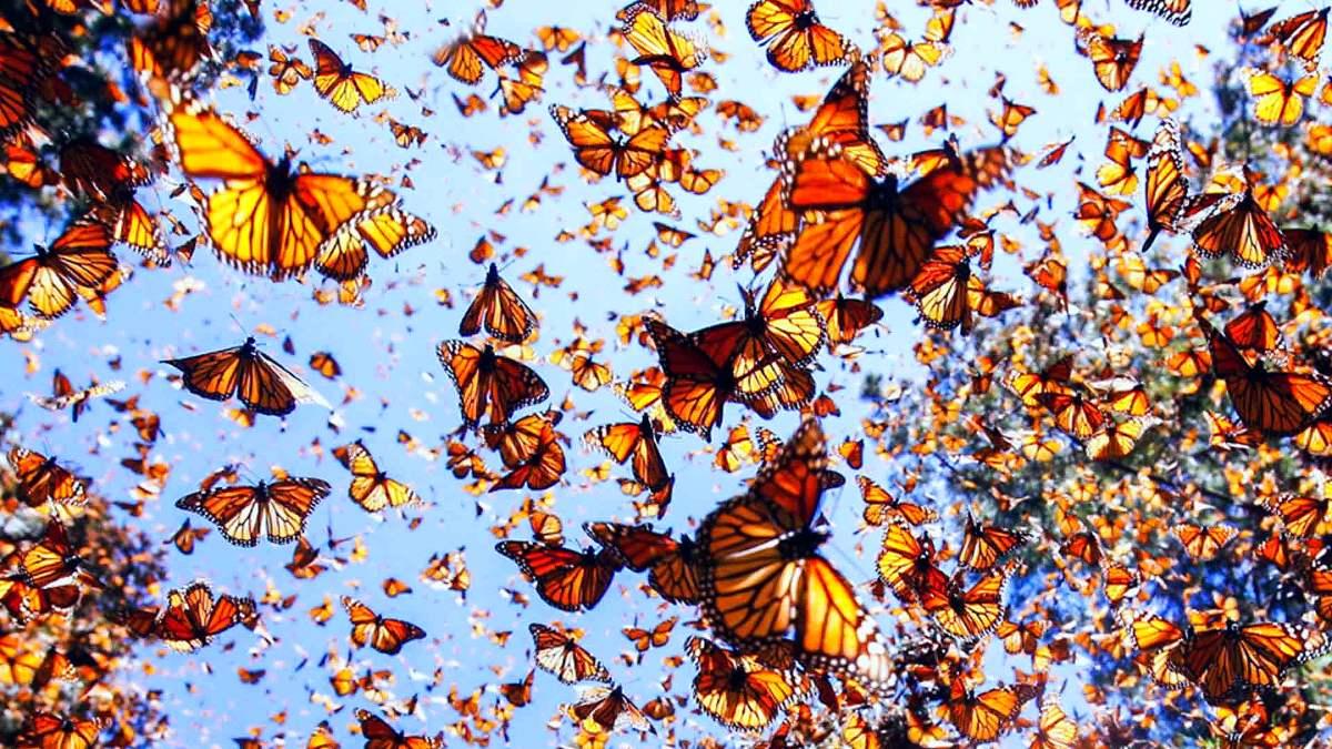 Portada mariposa