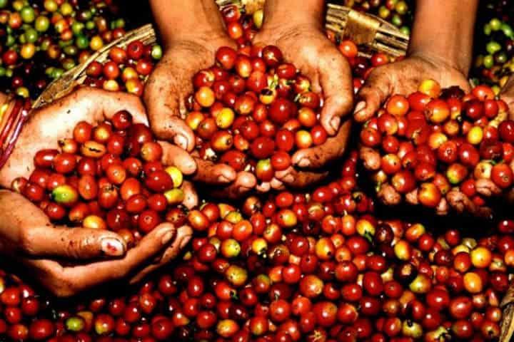 Granos de café Cuánto cuesta viajar