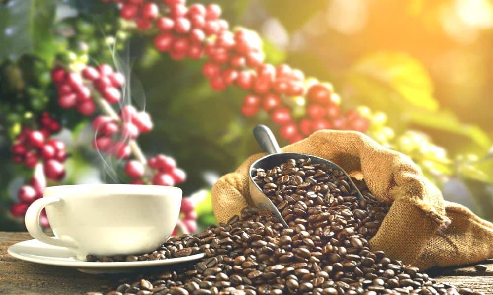 Ruta del café foto Descubro