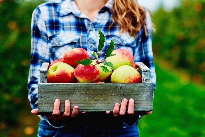 Feria de la manzana Foto Dónde ir