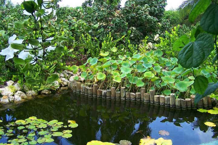 Fuente en el Parque Botánico Reina Elizabeth II Foto Lhb1239