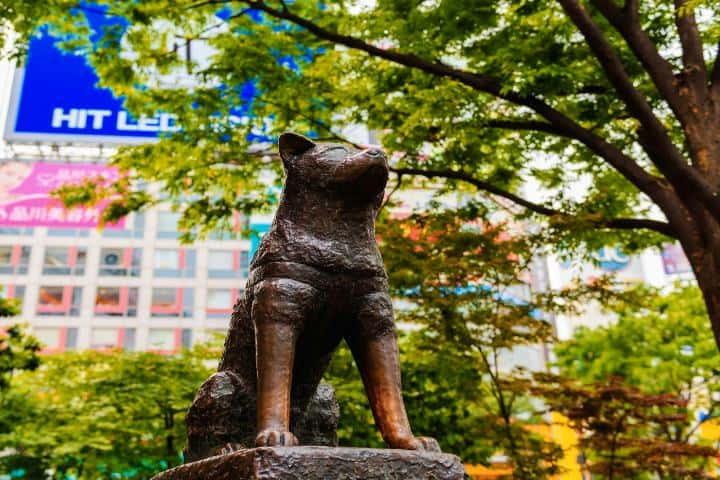 Hachiko. Foto: gotokio.org