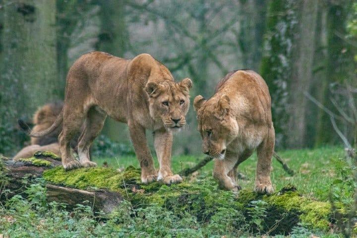 Katonga Wildlife Uganda. Foto: George Gillams