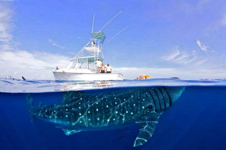 Nadar con tiburones Foto: Archivo