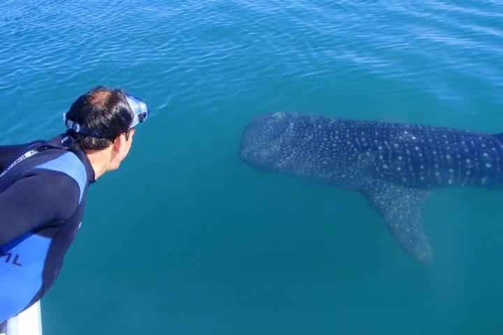 Nadar con tiburones: Foto Archivo