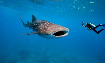 Nadar con tiburones Foto Shutterstock