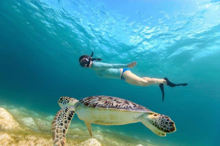 Posada acuario snorkeling-con-tortugas