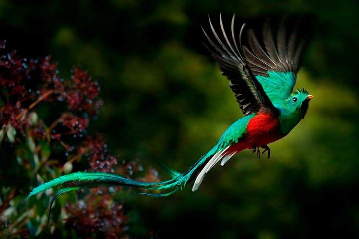 Quetzal Foto Mano Mexicana