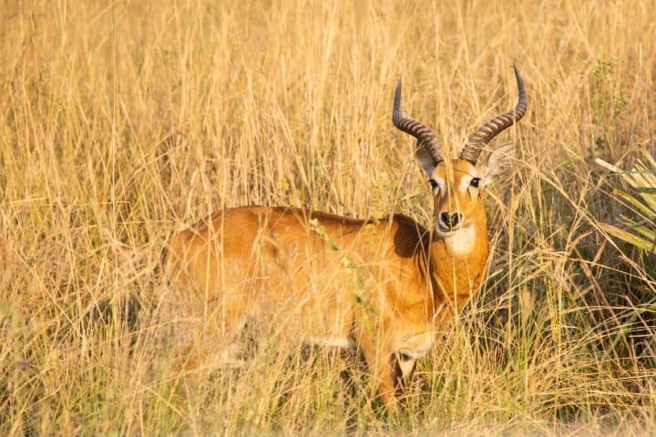 Uganda África. Foto: Sam Balye