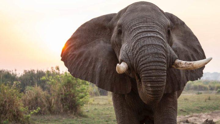 Uganda Safari. Foto: Sam Balye