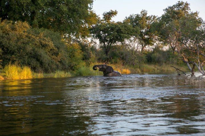 Zambia Elefante. Foto: Nicole Olwagen