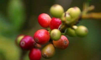 ruta del cafe01