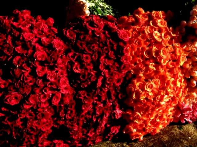 Xochimilco enmarcado por las flores | El Souvenir