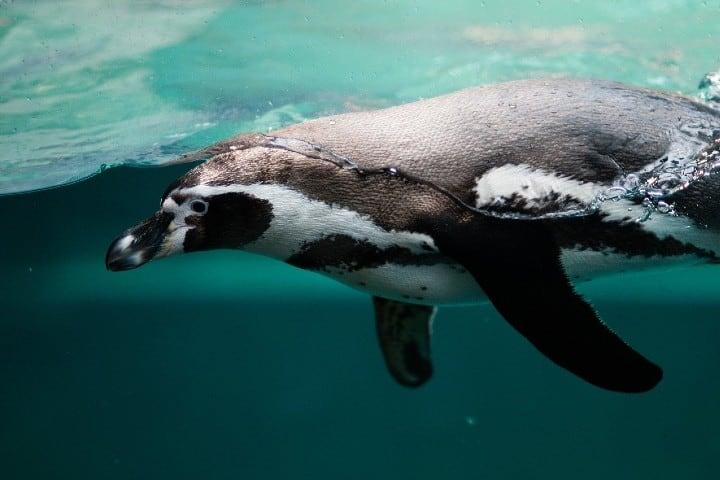 antartica (1)