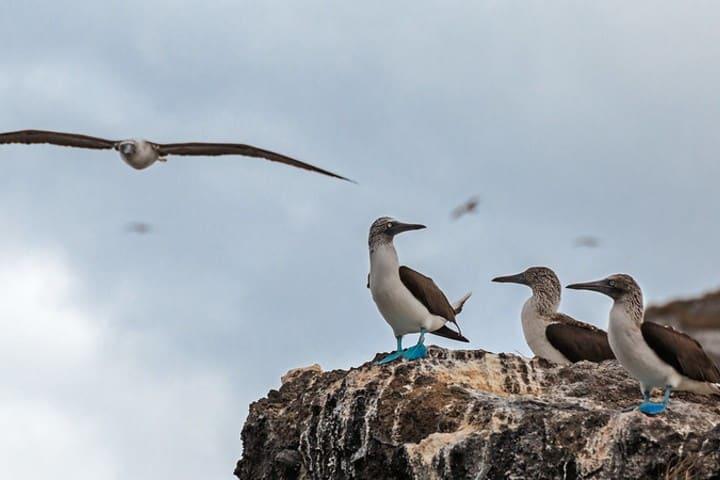 Pájaro Bobo. Foto: Memo Galápago