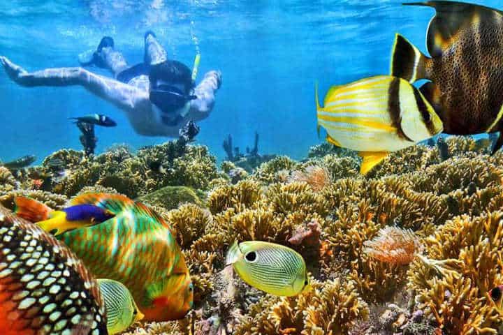 snorkeling posada lagunita Actividades en Los Roques Venezuela