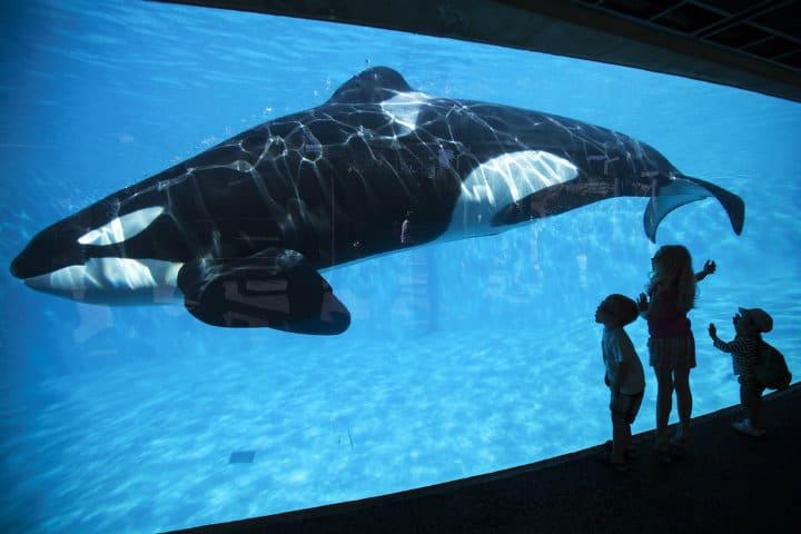 Aprende de la vida marina.SeaWorld.Foto.ViveUsa.2