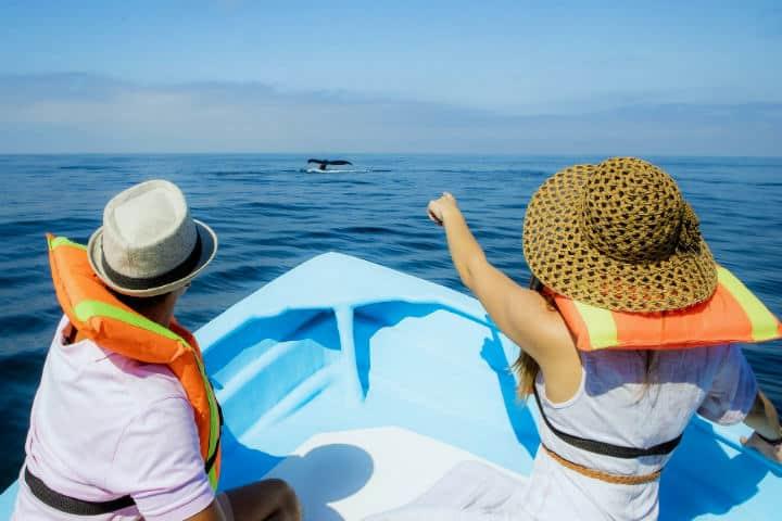 Avistamiento de ballenas.Qué hacer en San Blas Nayarit.Foto.Visita Tepic.8