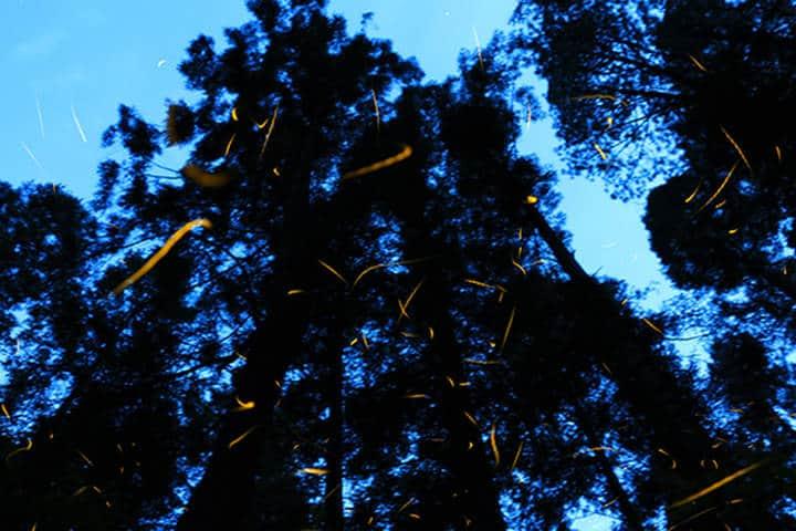Bosque. Santuario de Luciernagas. Tlaxcala. Foto. El Sol de Tlaxcala. 7