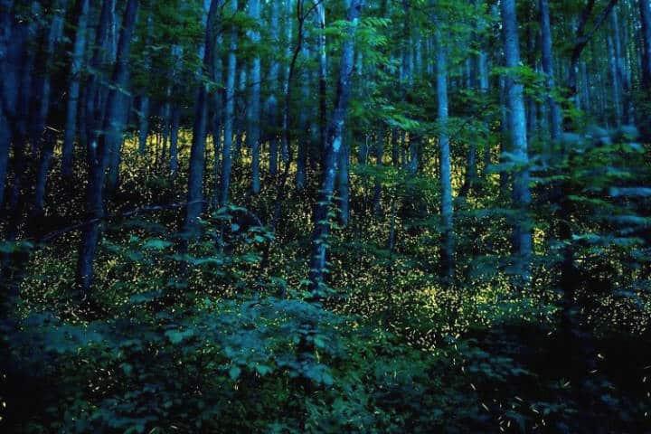 Bosque. Santuario de Luciernagas. Tlaxcala. Foto. InPerfecto . 9