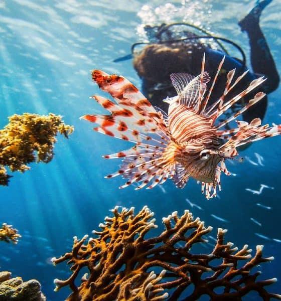 Caza del pez león Foto G1les
