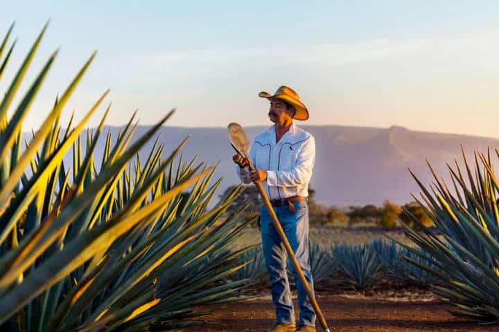 Tequila Jalisco. Foto Drinksmotion.