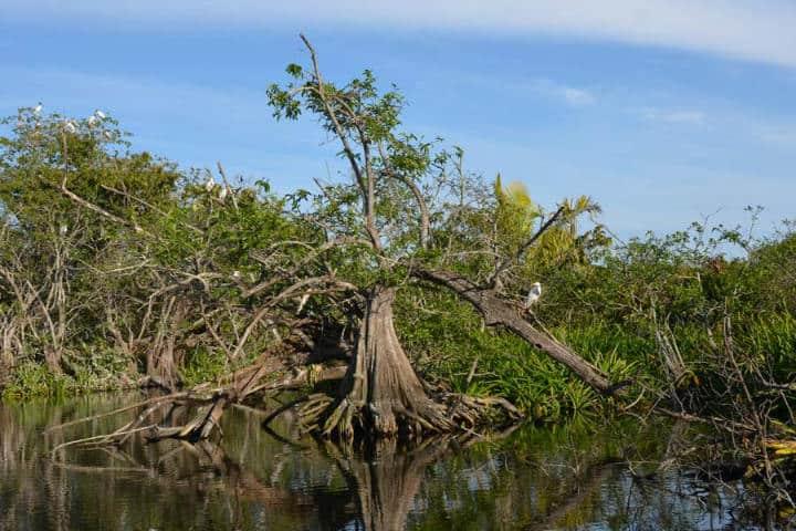 Ecosistema de San Blas Nayarit.Foto.Sección Amarilla.7