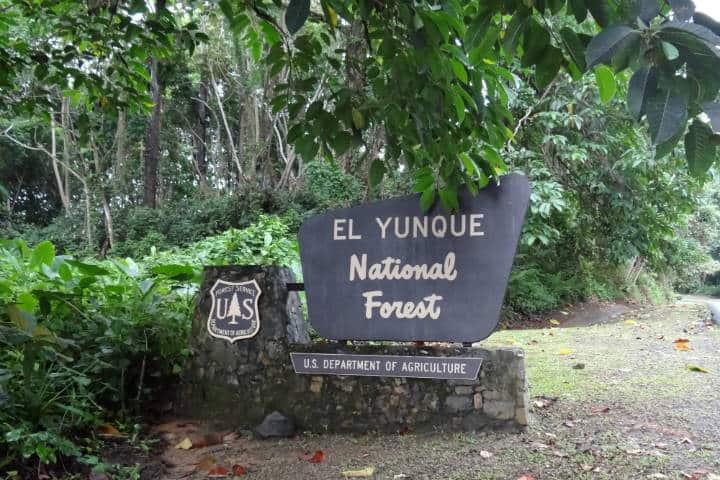 Entrada Bosque Nacional El Yunque. Puerto Rico. Foto Shannon McGee 1