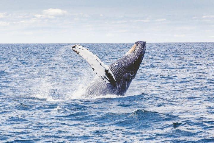 Espectáculo de la ballena gris Foto Free-Photos