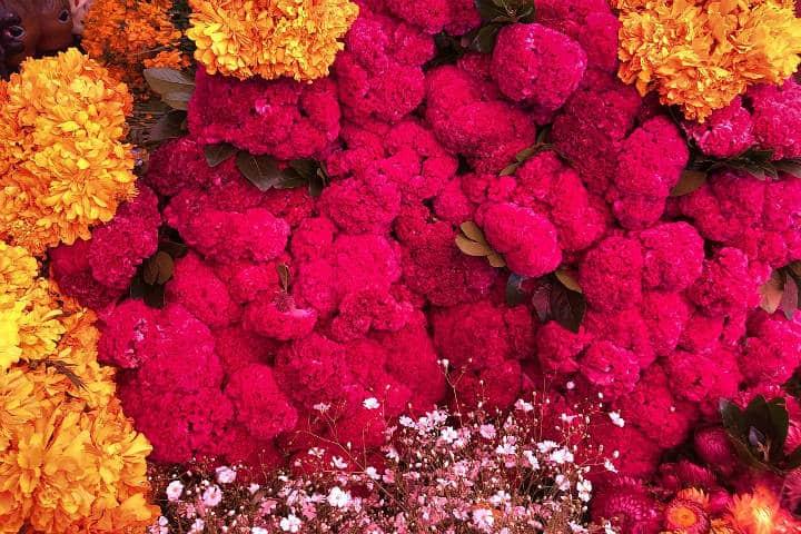 Flores para Día de Muertos. Mèxico, Foto Archivo 3