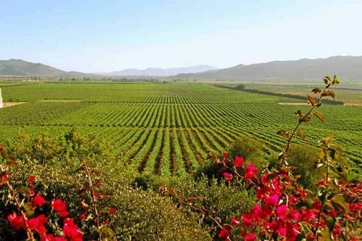 La ruta del vino en baja california. Foto Julio Rodríguez.