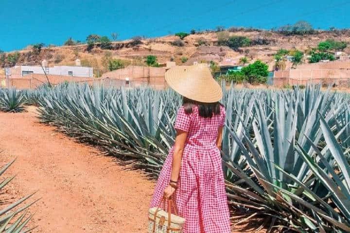 Ruta del Tequila. Foto La Verdad Noticias.