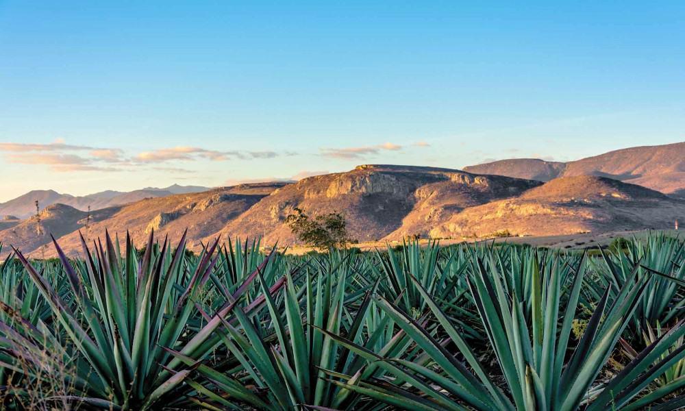 La ruta del mezcal Oaxaca Foto foodandtravel mx
