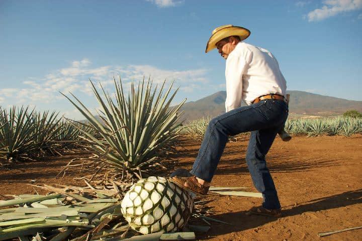 La ruta del mezcal Oaxaca Foto foodandwineespanol com