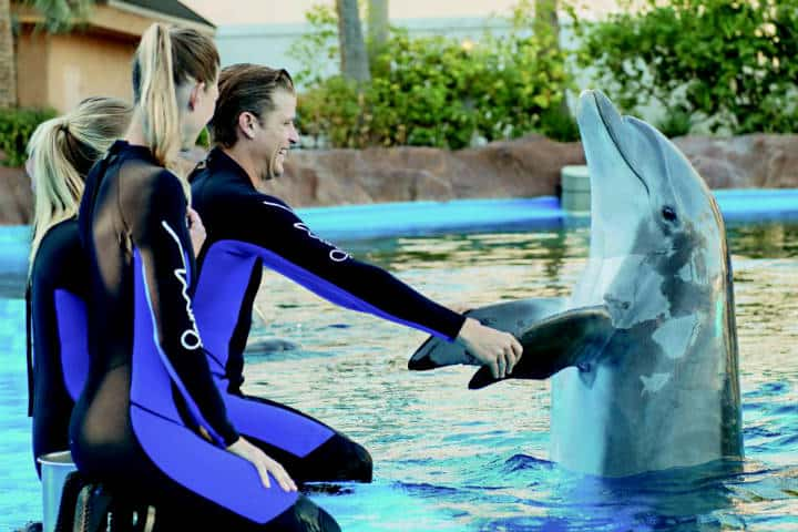 Siegfried & Roy's Secret Garden and Dolphin Habitat. Foto MGM Resorts Newsroom.