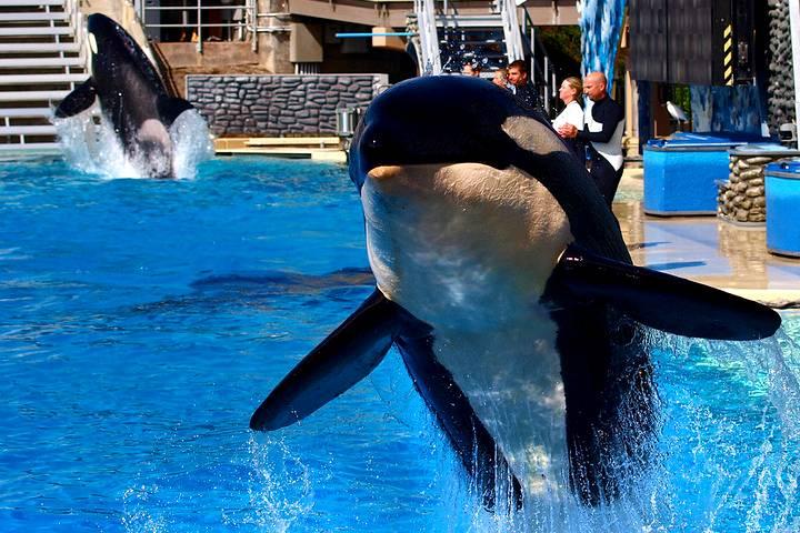 Orcas (1)