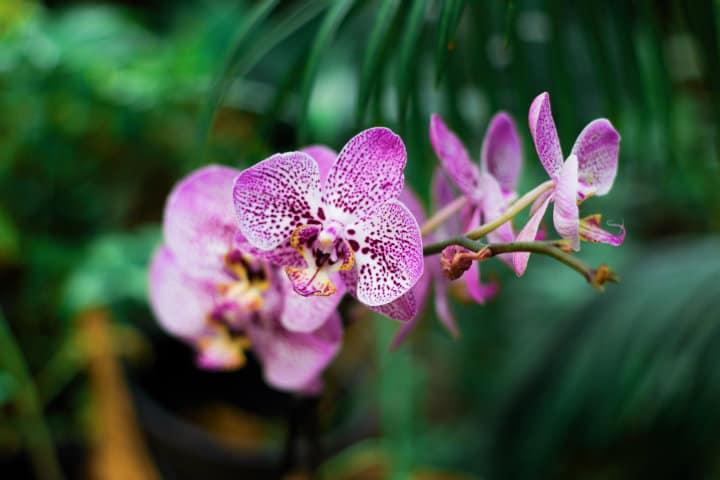Orquídea.Puerto Rico. Foto Yeimy Oliver 5