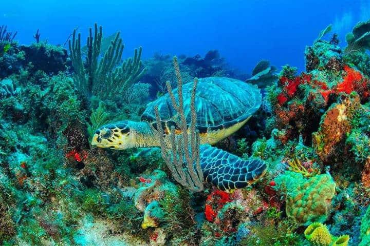 Paraíso del Caribe. Isla Mujeres. Foto IM 1