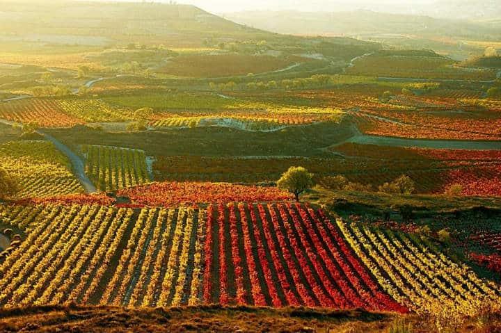 La ruta del vino en baja california. Foto Playas de Mexico.