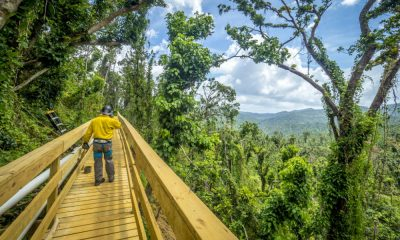 Portada. Bosque El Yunque. Puerto Rico. Foto Preston Keres 1