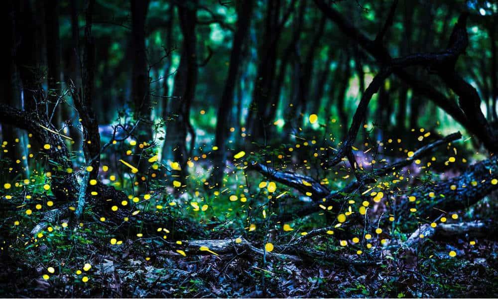 Portada. Santuario de luciérnagas. Tlaxcala. Foto. Smart Lighting