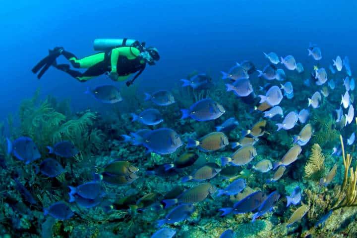 Banco Chinchorro. Foto SCUBA Reef.