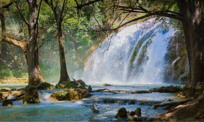Portada. Selva Lacandona. Chiapas. Foto. Carlos Alcazar.