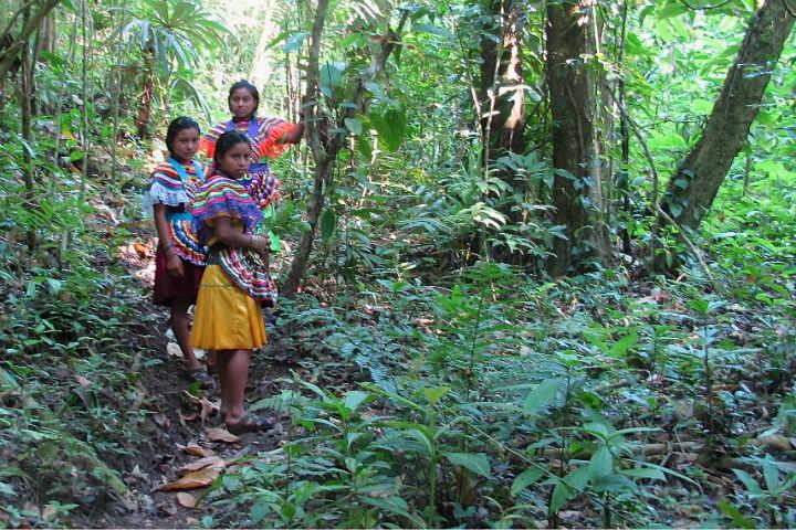 Selva Lacandona.Foto.Chiapas Paralelo